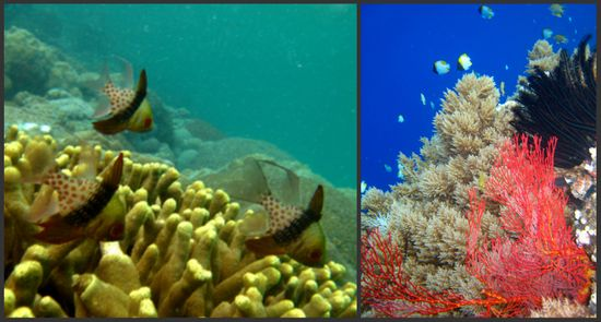 Coral collage